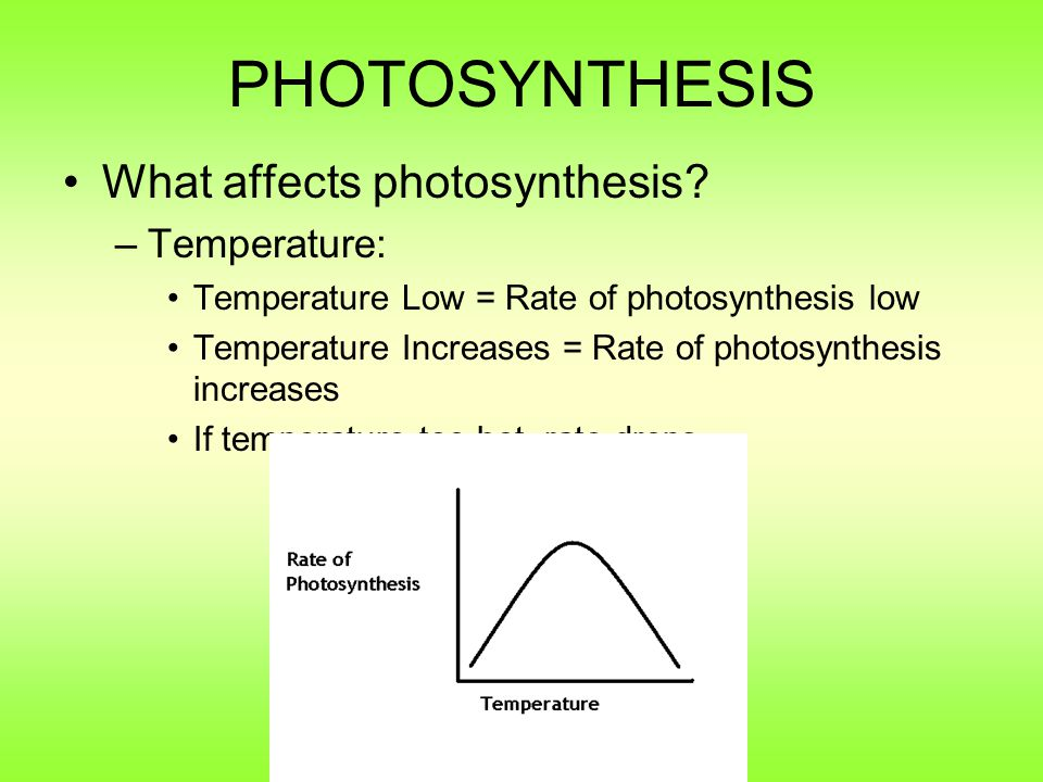 PHOTOSYNTHESIS What affects photosynthesis Temperature: