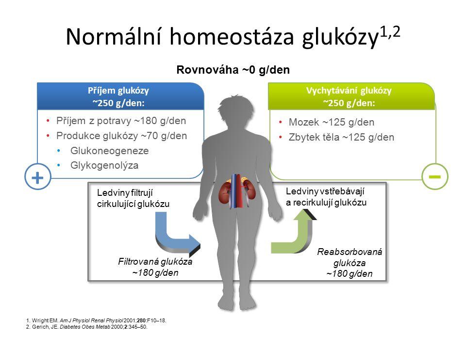 Normální homeostáza glukózy1,2