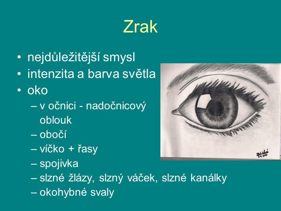 Zrak nejdůležitější smysl intenzita a barva světla oko