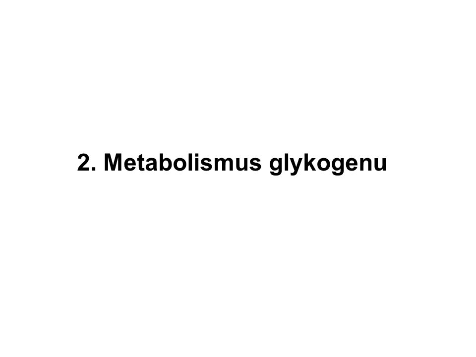 2. Metabolismus glykogenu