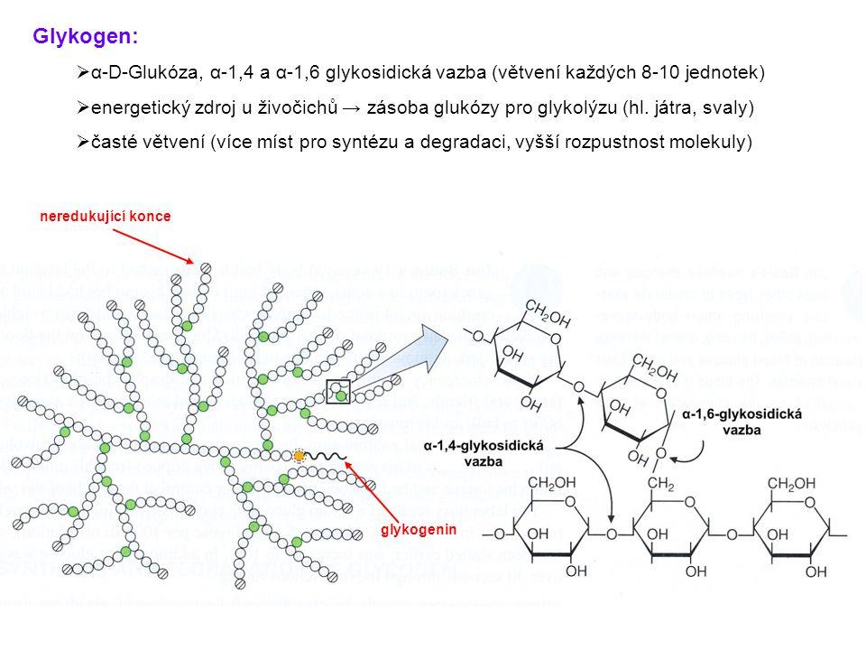 Glykogen: α-D-Glukóza, α-1,4 a α-1,6 glykosidická vazba (větvení každých 8-10 jednotek)
