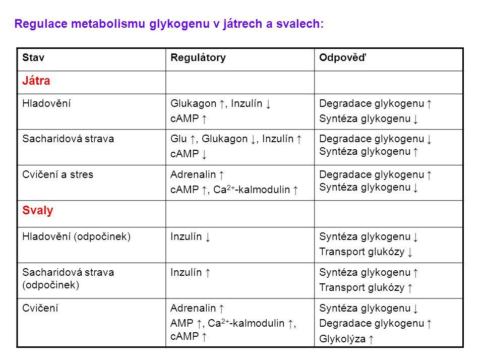 Regulace metabolismu glykogenu v játrech a svalech: