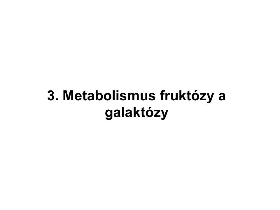 3. Metabolismus fruktózy a galaktózy