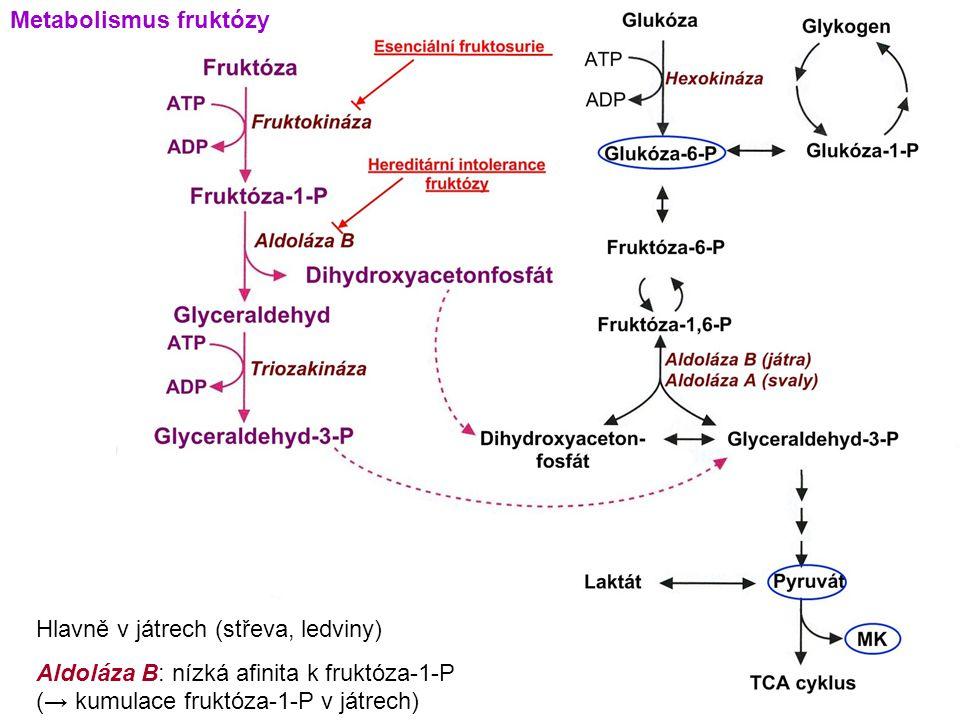 Metabolismus fruktózy