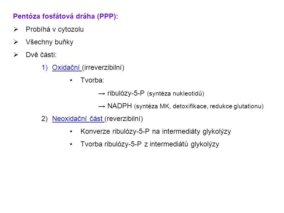 Pentóza fosfátová dráha (PPP):