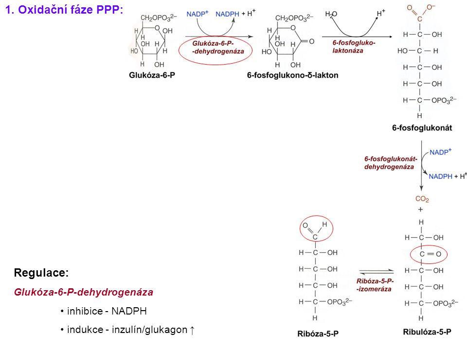 1. Oxidační fáze PPP: Regulace: Glukóza-6-P-dehydrogenáza
