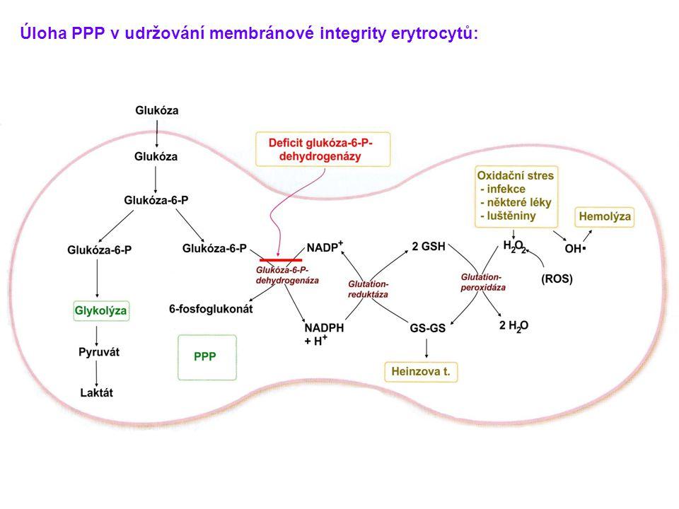Úloha PPP v udržování membránové integrity erytrocytů: