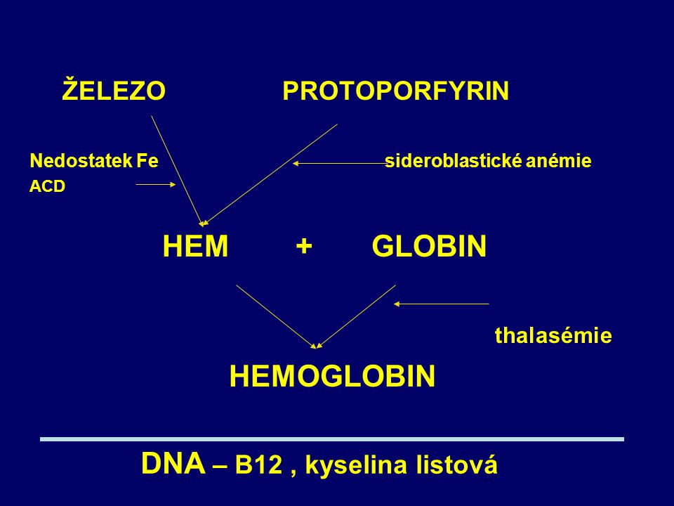 DNA – B12 , kyselina listová