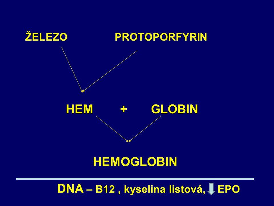 ŽELEZO PROTOPORFYRIN HEM + GLOBIN.