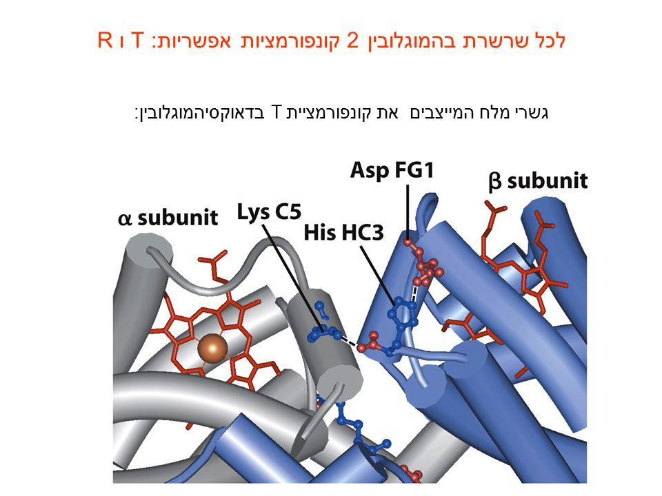 לכל שרשרת בהמוגלובין 2 קונפורמציות אפשריות: T ו R