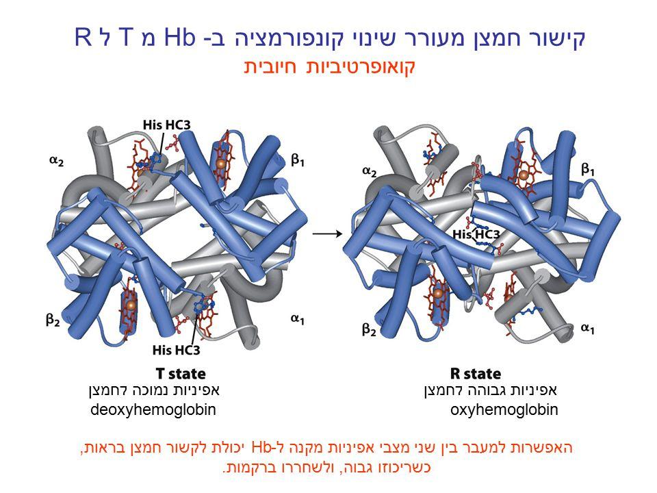קישור חמצן מעורר שינוי קונפורמציה ב- Hbמ T ל R קואופרטיביות חיובית