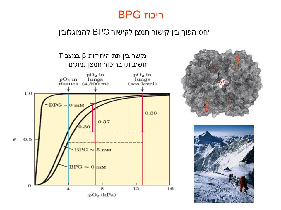 ריכוז BPG יחס הפוך בין קישור חמצן לקישור BPGלהמוגלובין