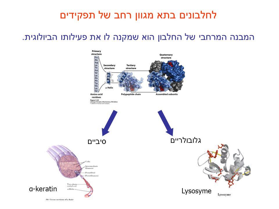 לחלבונים בתא מגוון רחב של תפקידים