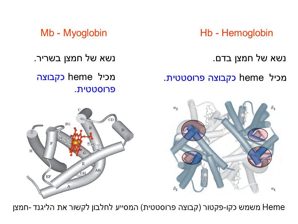 מכיל heme כקבוצה פרוסטטית. מכיל heme כקבוצה פרוסטטית.