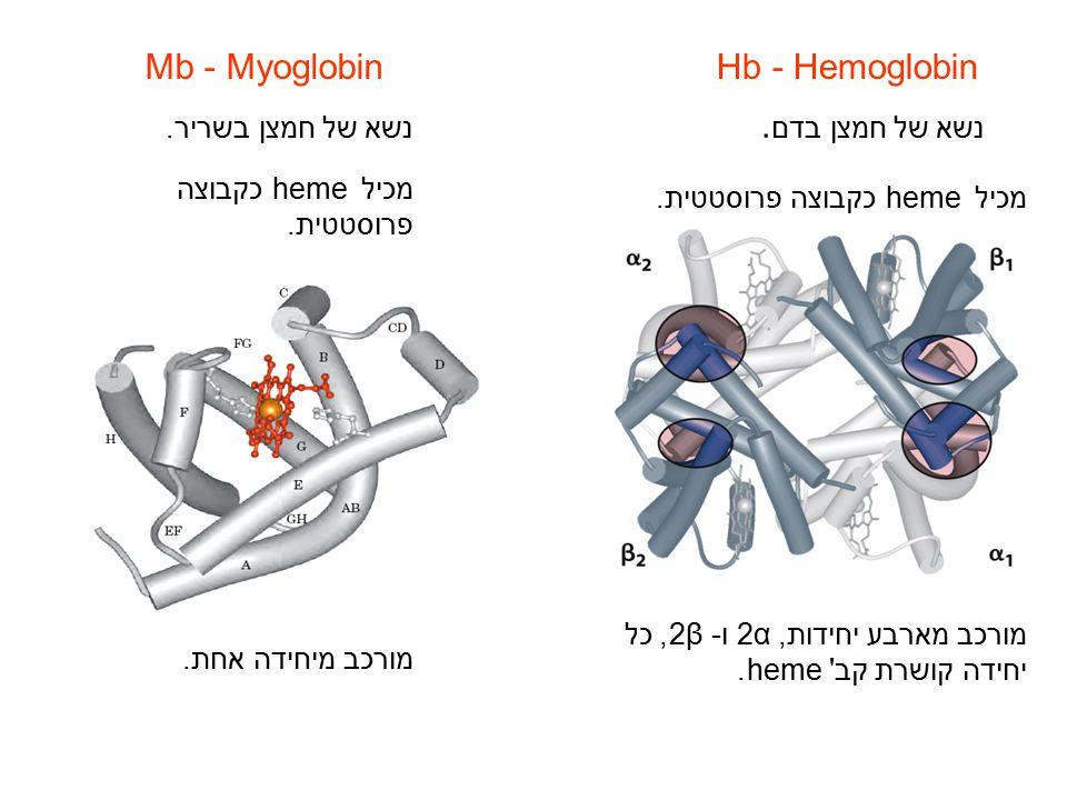 Mb - Myoglobin Hb - Hemoglobin נשא של חמצן בדם. נשא של חמצן בשריר.