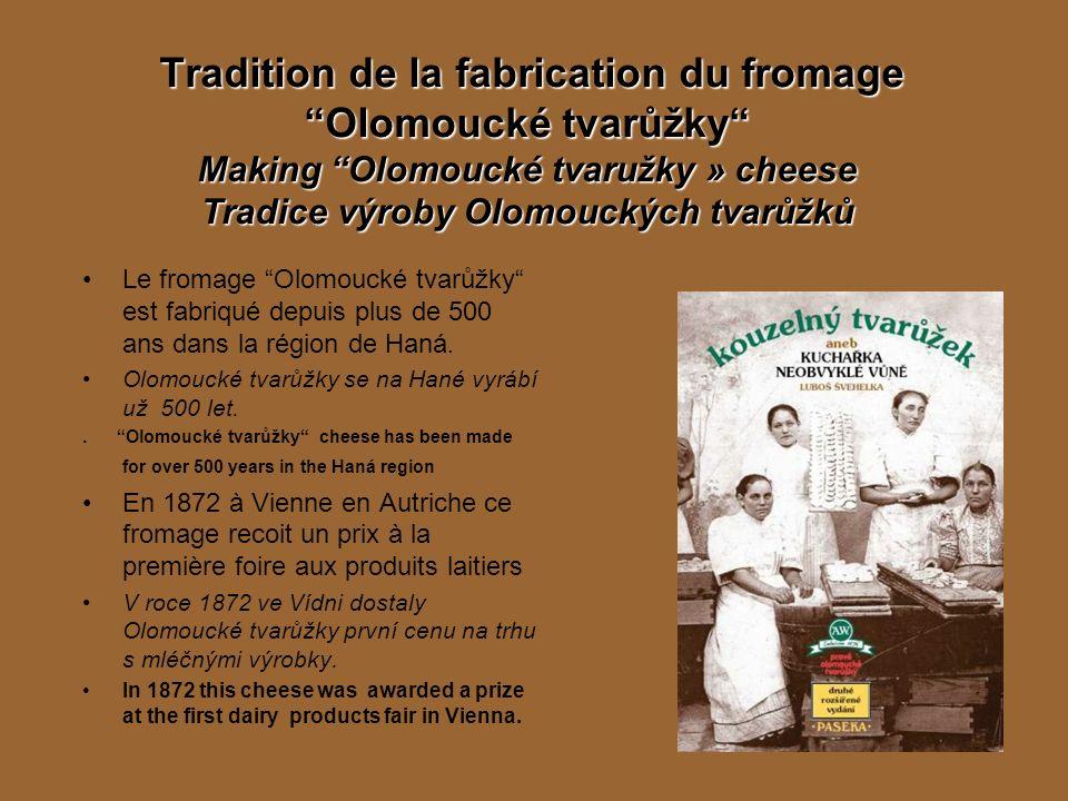 Tradition de la fabrication du fromage Olomoucké tvarůžky Making Olomoucké tvaružky » cheese Tradice výroby Olomouckých tvarůžků