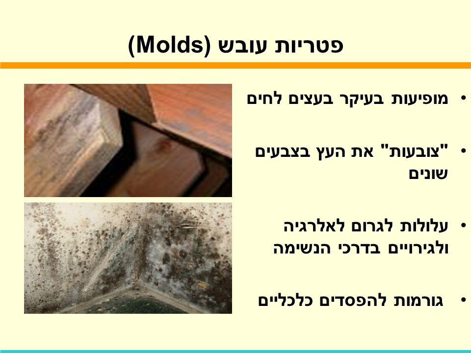פטריות עובש (Molds) מופיעות בעיקר בעצים לחים