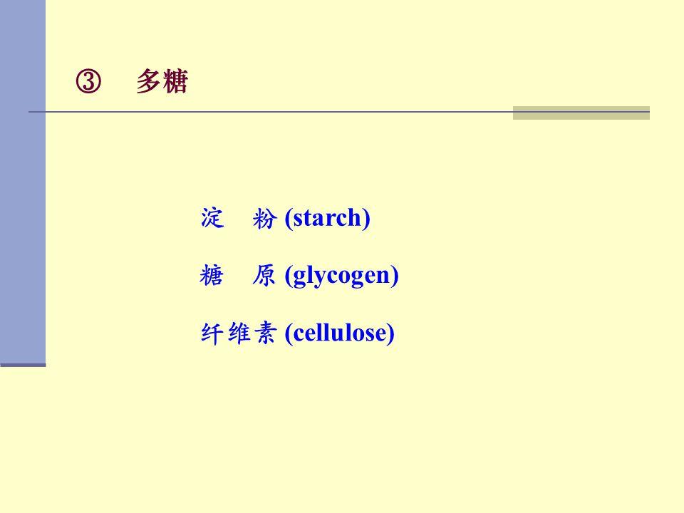 多糖 淀 粉 (starch) 糖 原 (glycogen) 纤维素 (cellulose)