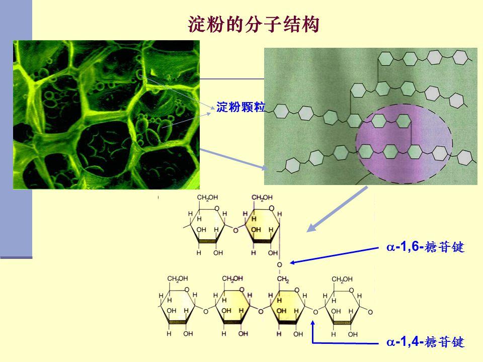 淀粉的分子结构 淀粉颗粒 -1,6-糖苷键 -1,4-糖苷键
