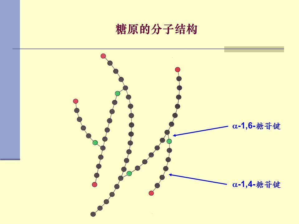 糖原的分子结构 -1,6-糖苷键 -1,4-糖苷键