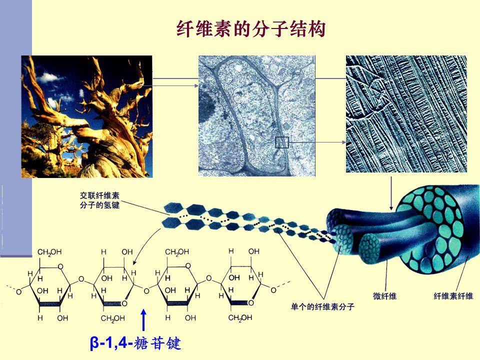 纤维素的分子结构 β-1,4-糖苷键