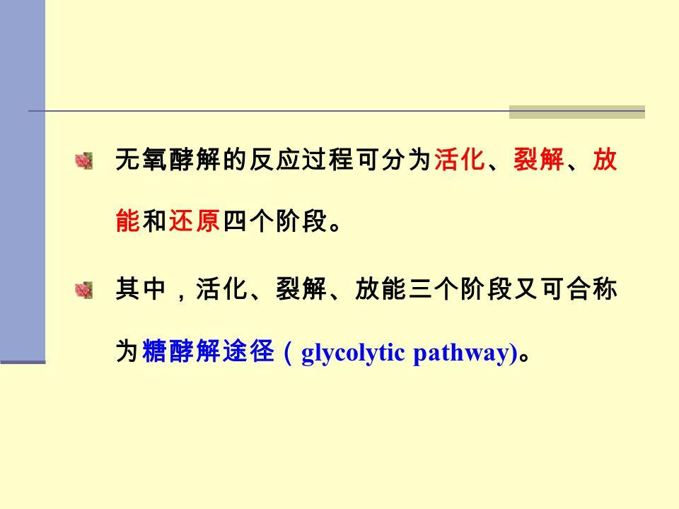 无氧酵解的反应过程可分为活化、裂解、放能和还原四个阶段。