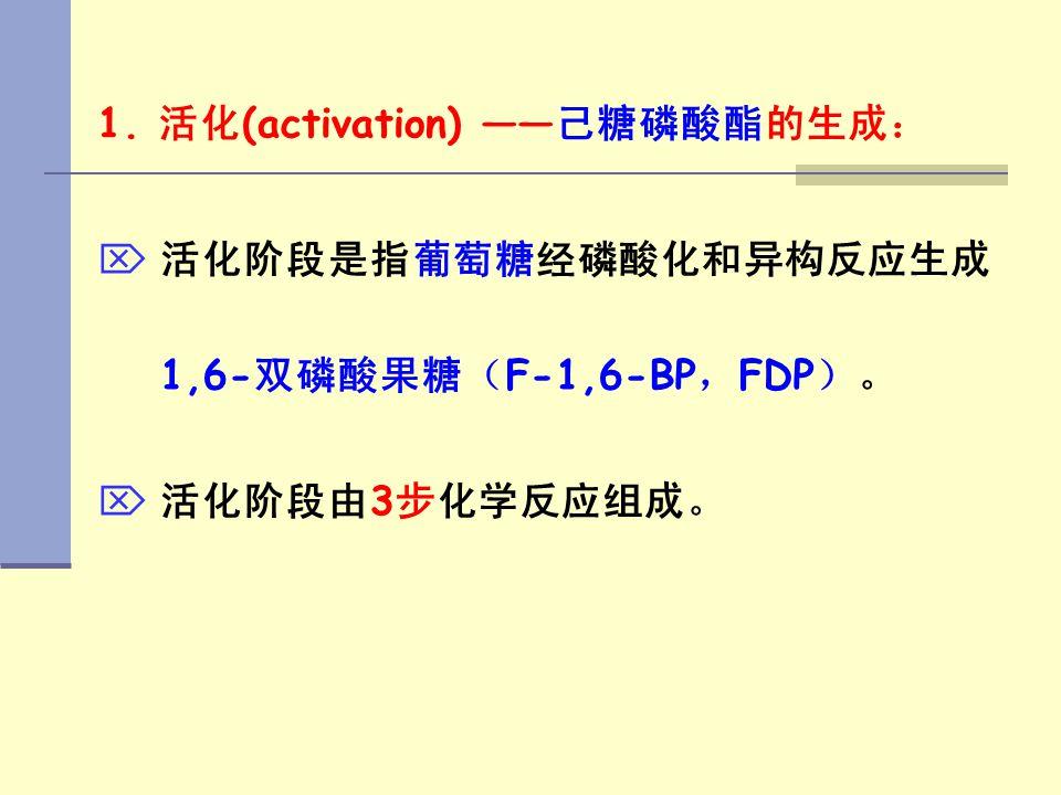 1. 活化(activation) ——己糖磷酸酯的生成: