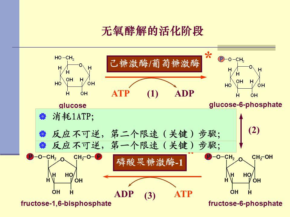 fructose-1,6-bisphosphate