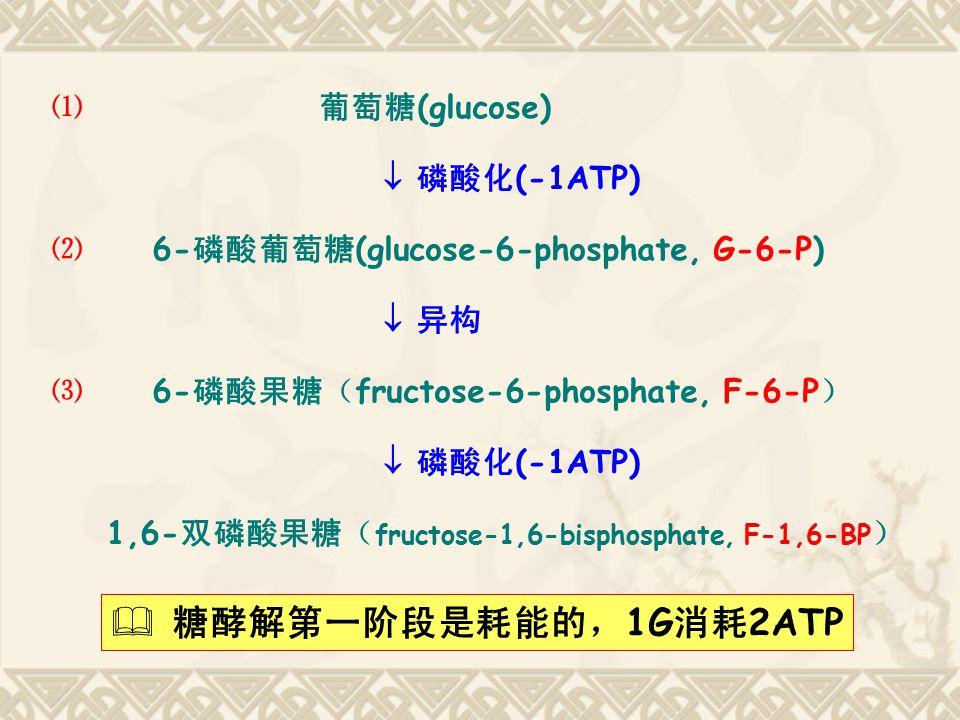 糖酵解第一阶段是耗能的,1G消耗2ATP ⑴ 葡萄糖(glucose)  磷酸化(-1ATP)