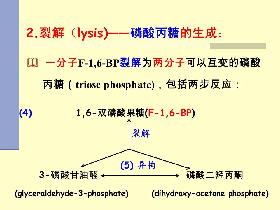 (glyceraldehyde-3-phosphate) (dihydroxy-acetone phosphate)