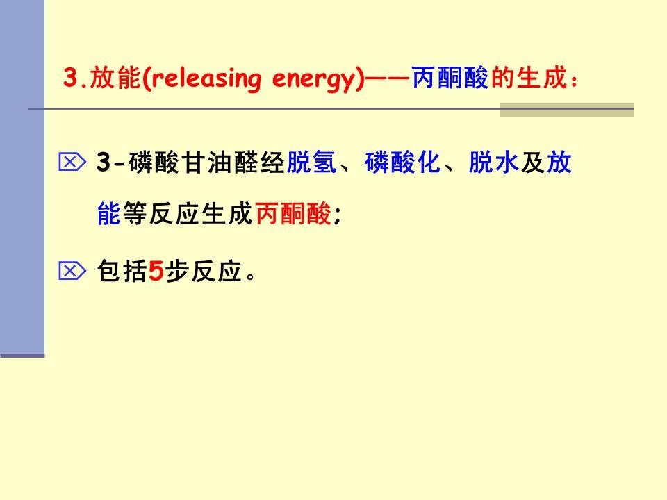 3.放能(releasing energy)——丙酮酸的生成: