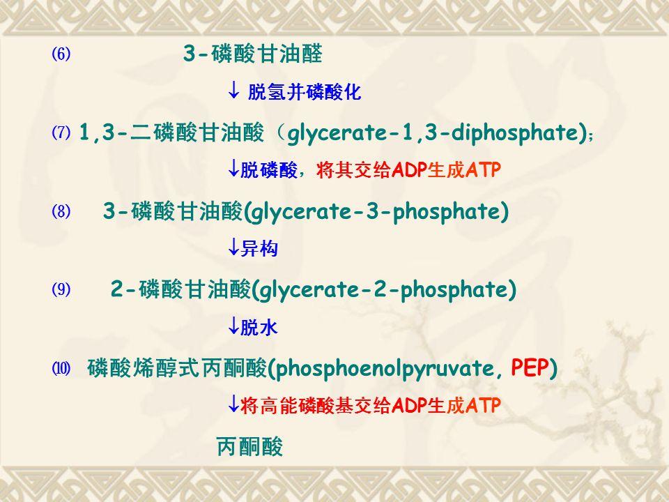 丙酮酸 ⑹ 3-磷酸甘油醛  脱氢并磷酸化 ⑺ 1,3-二磷酸甘油酸(glycerate-1,3-diphosphate);