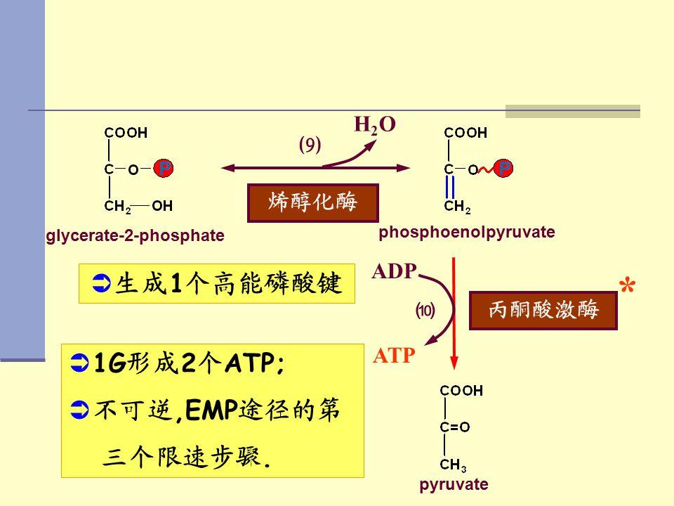 glycerate-2-phosphate