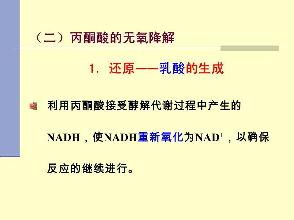 (二)丙酮酸的无氧降解 1. 还原——乳酸的生成