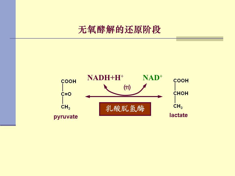 无氧酵解的还原阶段 乳酸脱氢酶 NAD+ NADH+H+ ⑾ pyruvate lactate
