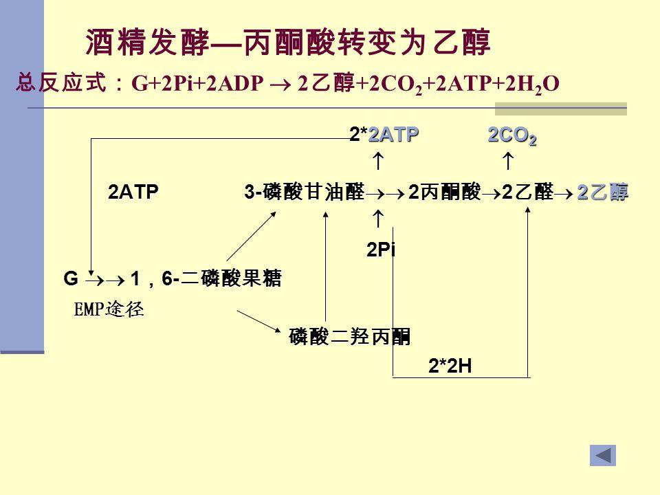 酒精发酵—丙酮酸转变为乙醇 总反应式:G+2Pi+2ADP  2乙醇+2CO2+2ATP+2H2O