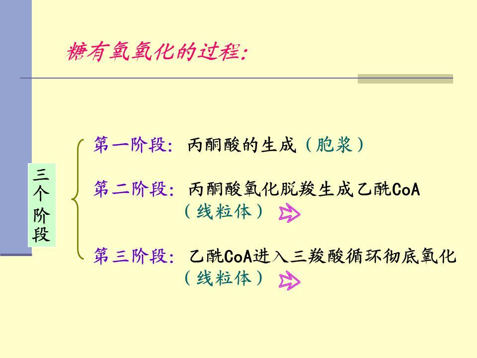 糖有氧氧化的过程: 第一阶段:丙酮酸的生成(胞浆) 第二阶段:丙酮酸氧化脱羧生成乙酰CoA 三个 阶段 (线粒体)