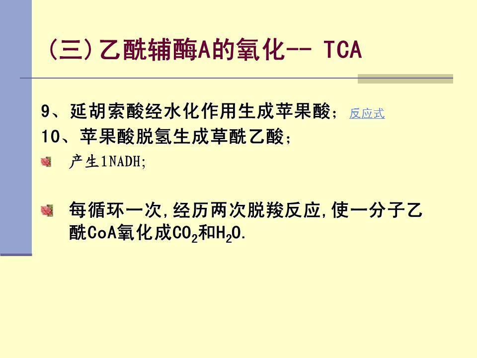 (三)乙酰辅酶A的氧化-- TCA 9、延胡索酸经水化作用生成苹果酸;反应式 10、苹果酸脱氢生成草酰乙酸;