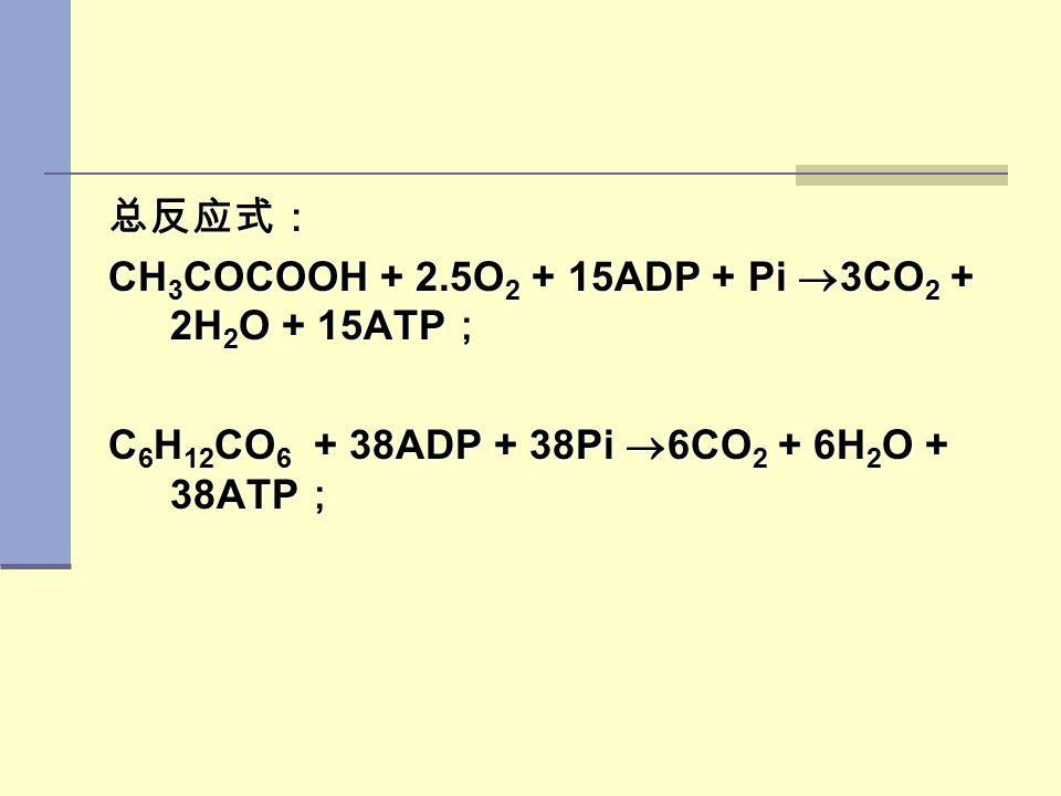 总反应式: CH3COCOOH + 2.5O2 + 15ADP + Pi 3CO2 + 2H2O + 15ATP; C6H12CO6 + 38ADP + 38Pi 6CO2 + 6H2O + 38ATP;