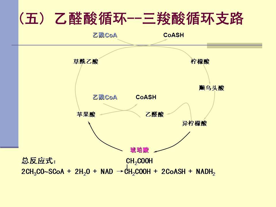 (五) 乙醛酸循环--三羧酸循环支路 总反应式: CH2COOH