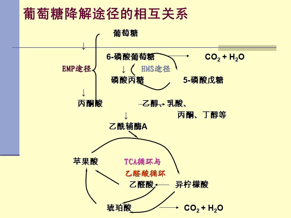 葡萄糖降解途径的相互关系 葡萄糖 ↓ 6-磷酸葡萄糖 CO2 + H2O EMP途径 ↓ HMS途径 磷酸丙糖 5-磷酸戊糖