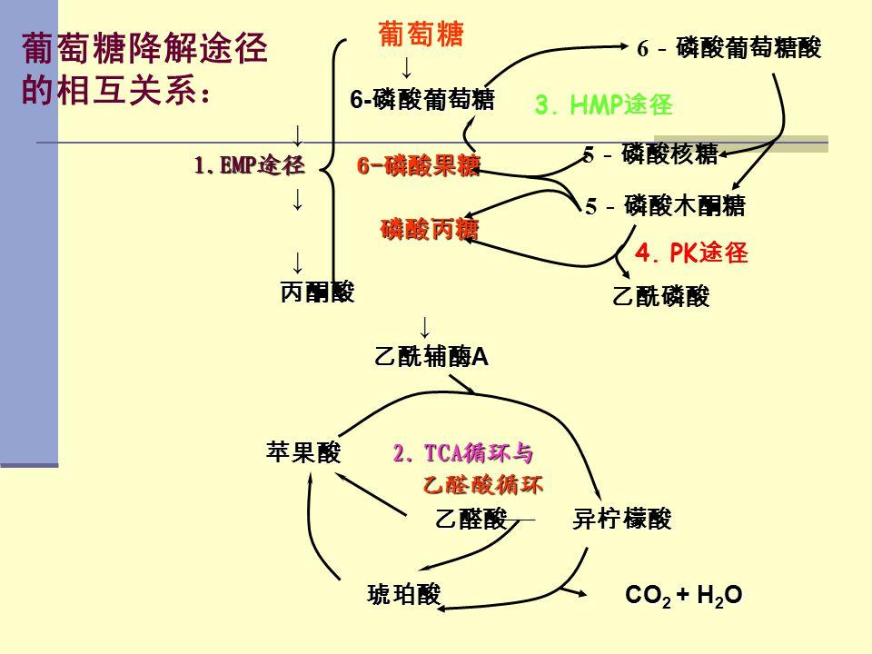 葡萄糖降解途径 的相互关系: 6-磷酸葡萄糖 葡萄糖 ↓ 6-磷酸葡萄糖酸 3. HMP途径 ↓ 1.EMP途径 6-磷酸果糖 5-磷酸核糖