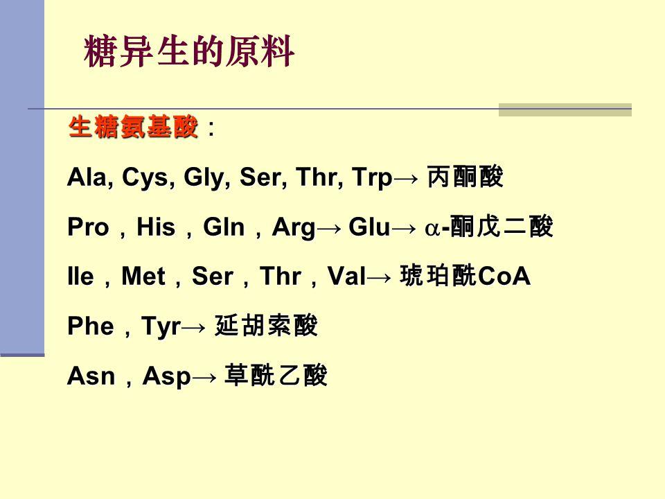 糖异生的原料 生糖氨基酸: Ala, Cys, Gly, Ser, Thr, Trp→ 丙酮酸