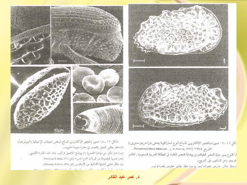 د. عمر عبد القادر