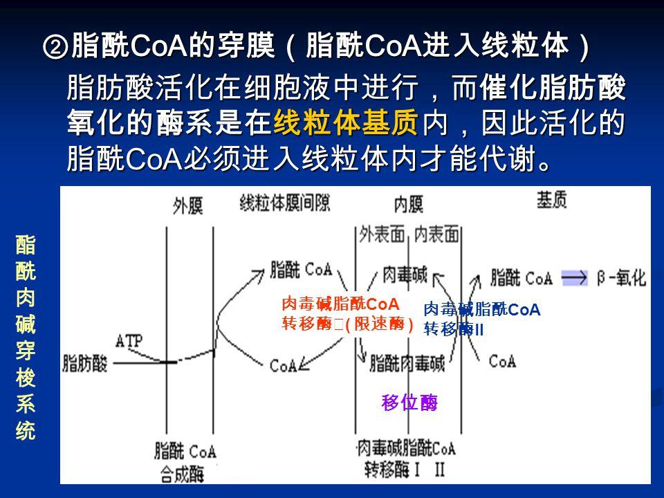 ②脂酰CoA的穿膜(脂酰CoA进入线粒体)