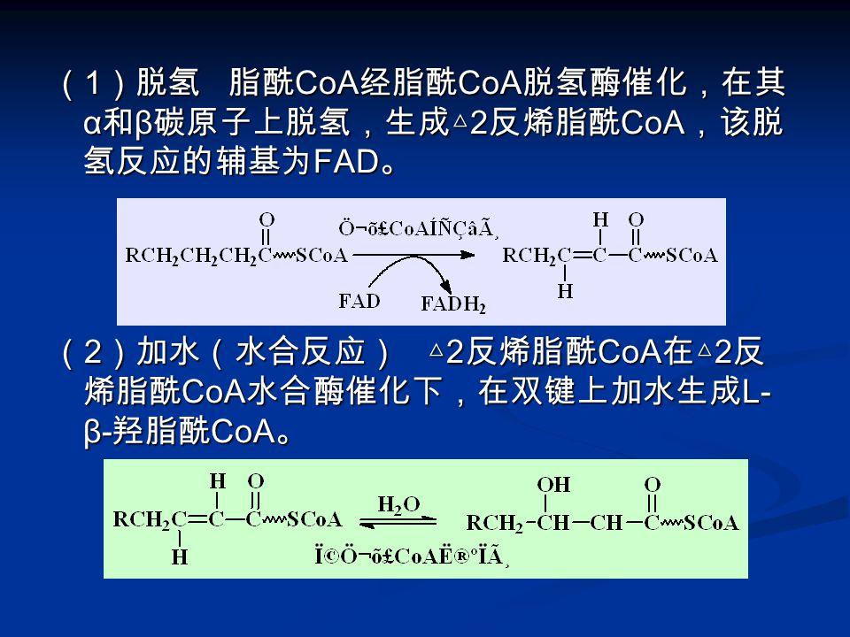 (1)脱氢 脂酰CoA经脂酰CoA脱氢酶催化,在其α和β碳原子上脱氢,生成△2反烯脂酰CoA,该脱氢反应的辅基为FAD。