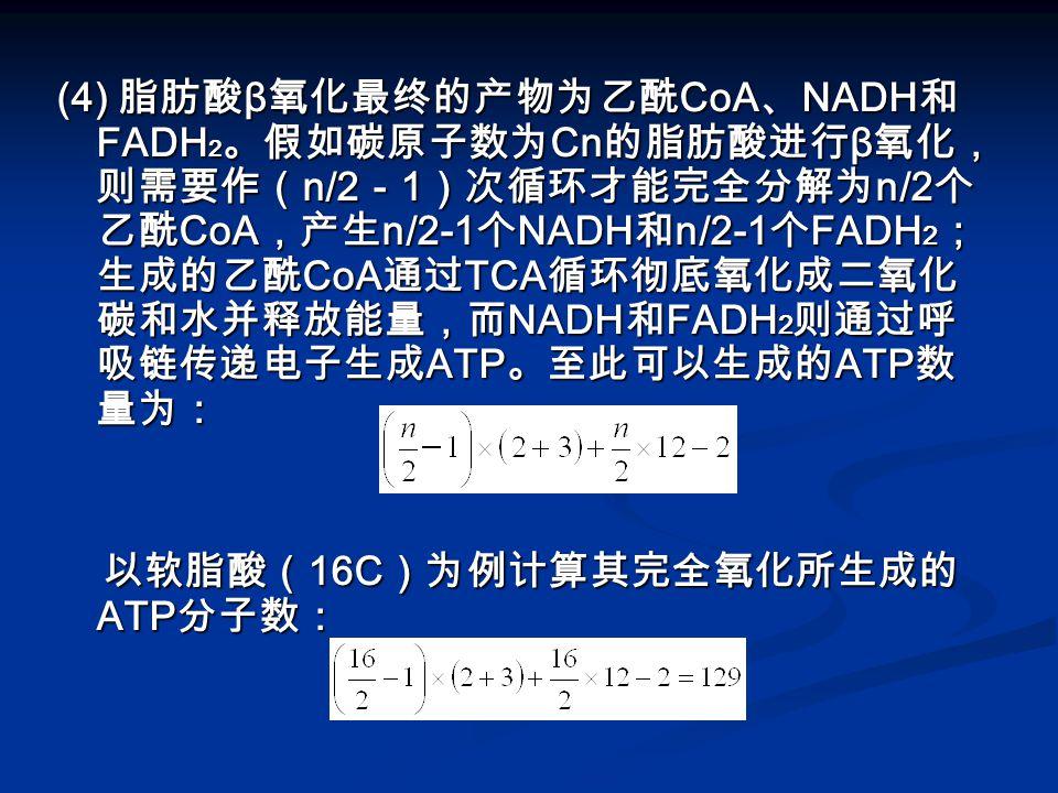 (4) 脂肪酸β氧化最终的产物为乙酰CoA、NADH和FADH2。假如碳原子数为Cn的脂肪酸进行β氧化,则需要作(n/2-1)次循环才能完全分解为n/2个乙酰CoA,产生n/2-1个NADH和n/2-1个FADH2;生成的乙酰CoA通过TCA循环彻底氧化成二氧化碳和水并释放能量,而NADH和FADH2则通过呼吸链传递电子生成ATP。至此可以生成的ATP数量为: