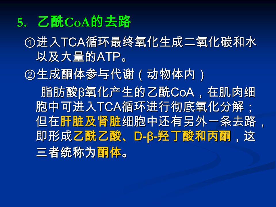 5. 乙酰CoA的去路 ①进入TCA循环最终氧化生成二氧化碳和水以及大量的ATP。 ②生成酮体参与代谢(动物体内)