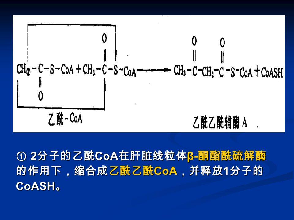图 酮体的生成-1 ① 2分子的乙酰CoA在肝脏线粒体β-酮酯酰硫解酶的作用下,缩合成乙酰乙酰CoA,并释放1分子的CoASH。