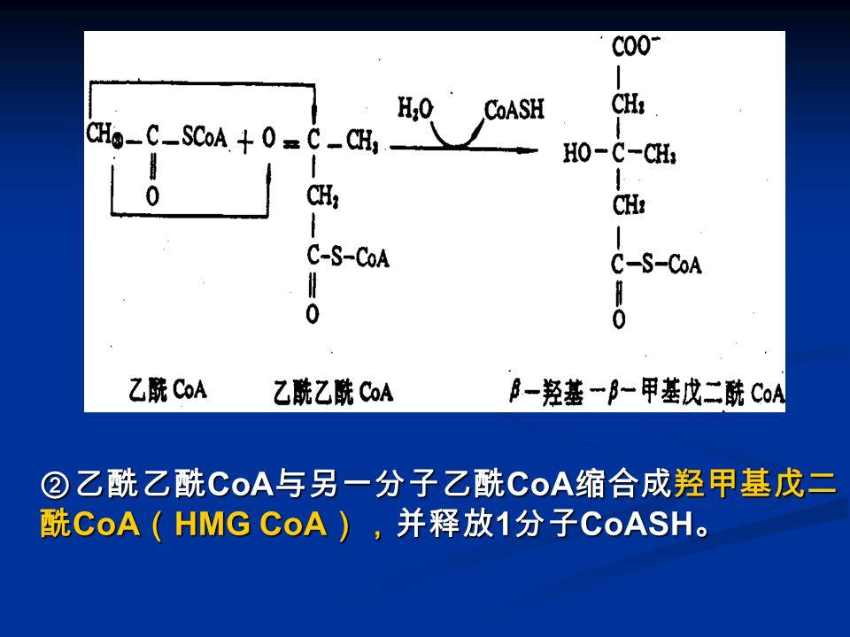 图 酮体的生成-2 ②乙酰乙酰CoA与另一分子乙酰CoA缩合成羟甲基戊二酰CoA(HMG CoA),并释放1分子CoASH。